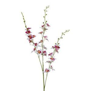 Orchidej 3018125mm-50