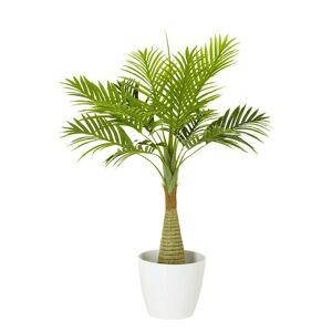 Rostlina Dekorační Fächerpalme