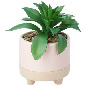 Rostlina umělá sukkulente